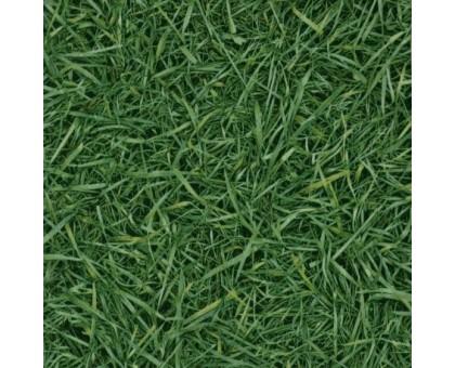 GRASS 25